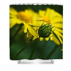 Yellow Daisy Bud Shower Curtain