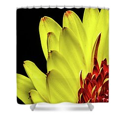 Yellow Daisy Peeking Shower Curtain