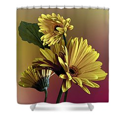 Yellow Daisy Trio Shower Curtain by Judy  Johnson