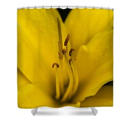 Yellow Shower Curtain by Dan Hefle