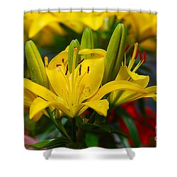 Yellow Day Lily 20120614_55a Shower Curtain