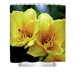 Yellow Daylilly 0204 H_2 Shower Curtain