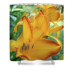 Shower Curtain featuring the photograph Yellow Daylily by Rebecca Overton