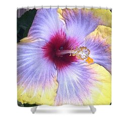 Yellow Delight Shower Curtain
