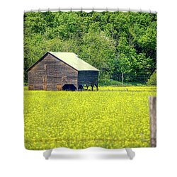 Yellow Field Rustic Shed Shower Curtain