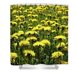 Yellow Field Two  Shower Curtain by Lyle Crump