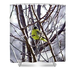 Shower Curtain featuring the photograph Yellow Finch by Bonnie Muir