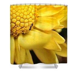 Yellow Flower Ant Macro Shower Curtain