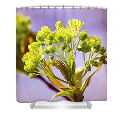 Yellow Flower Close Up Shower Curtain