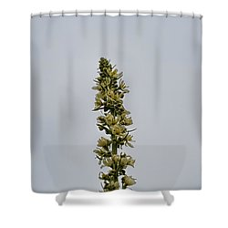 Shower Curtain featuring the photograph Yellow Flowers And Buds. by Leif Sohlman
