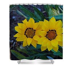 Gazania Rigens - Treasure Flower Shower Curtain