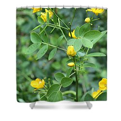 Shower Curtain featuring the photograph Yellow Flowers by Karen Nicholson