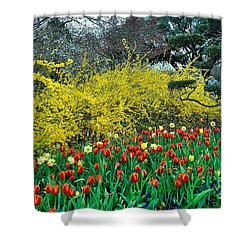 Shower Curtain featuring the photograph Yellow Forsythia by Diana Mary Sharpton