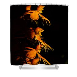 Yellow-fringe Orchid Shower Curtain
