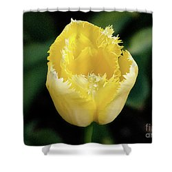Yellow Fringe Tulip Shower Curtain