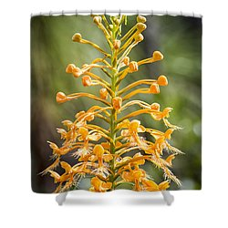 Yellow Fringed Orchid Shower Curtain