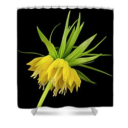 Yellow Fritillaria Imperialis Shower Curtain by Jim Hughes