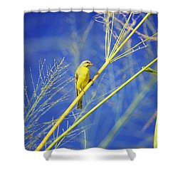 Yellow Fronted Canary Shower Curtain by Bob Abraham - Printscapes