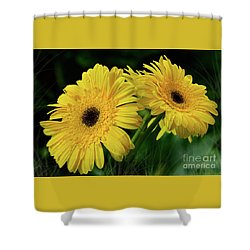 Shower Curtain featuring the photograph Yellow Gerbera Daisies By Kaye Menner by Kaye Menner