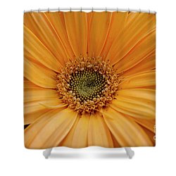 Shower Curtain featuring the photograph Yellow Gerbera Daisy by Ivete Basso Photography