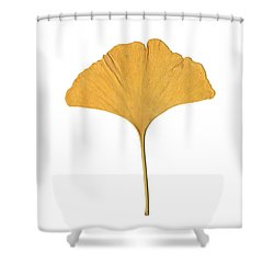 Yellow Ginkgo Leaf Shower Curtain by Renee Trenholm