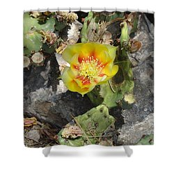 Yellow Cactus Flower Blossom Shower Curtain