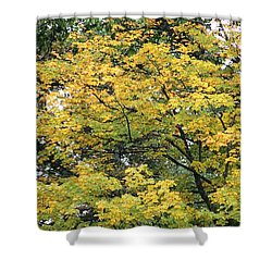Yellow Gold Fall Tree Shower Curtain by Ellen O'Reilly