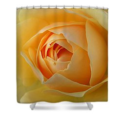 Shower Curtain featuring the photograph Yellow Graham Thomas Rose by Jocelyn Friis
