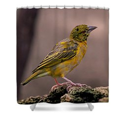 Yellow-green Vireo Shower Curtain by Rona Black