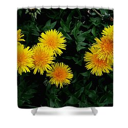 Yellow In Green Shower Curtain