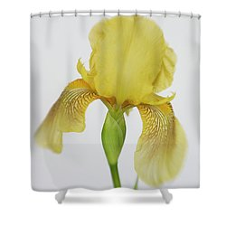 Shower Curtain featuring the photograph Yellow Iris A Symbol Of Passion by David and Carol Kelly