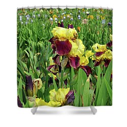 Yellow Iris Shower Curtain by Diane Lent