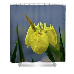 Yellow Iris Shower Curtain by Jean Haynes