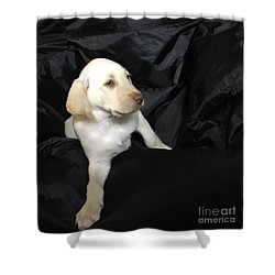 Yellow Lab Puppy Sadie Shower Curtain