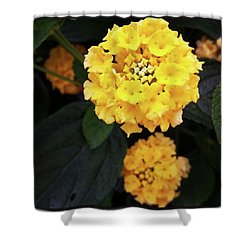 Shower Curtain featuring the photograph Yellow Lantanas Along The Scenic Drive by Mr Photojimsf