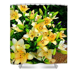Shower Curtain featuring the photograph Yellow Lilies 2 by Randall Weidner