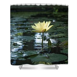 Yellow Lilly Tranquility Shower Curtain