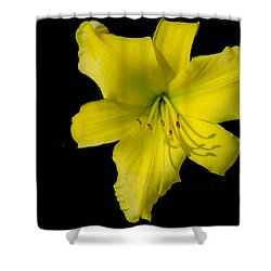 Yellow Lily Flower Black Background Shower Curtain by Bruce Pritchett