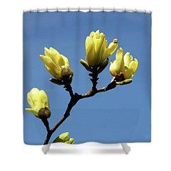 Yellow Magnolia Shower Curtain