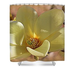 Yellow Magnolia In Full Bloom Shower Curtain