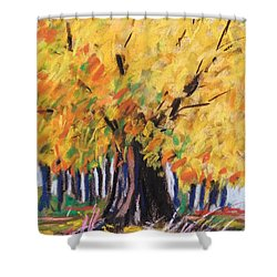 Yellow Maple Wet Trunk Shower Curtain by John Williams