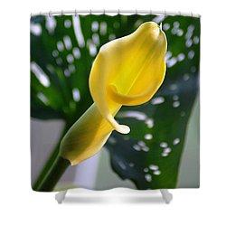 Yellow Mini Calla Lilies Shower Curtain