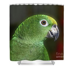 Yellow Naped Amazon Parrot Shower Curtain by Smilin Eyes  Treasures