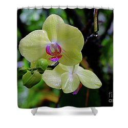 Yellow Orchid Shower Curtain by Mini Arora