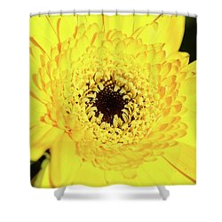 Yellow Pedal Shower Curtain