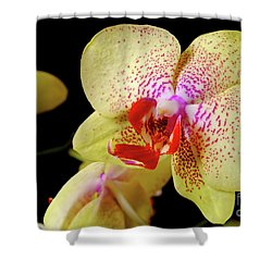 Shower Curtain featuring the photograph Yellow Phalaenopsis Orchid by Dariusz Gudowicz