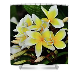 Shower Curtain featuring the photograph Yellow Plumeria By Kaye Menner by Kaye Menner