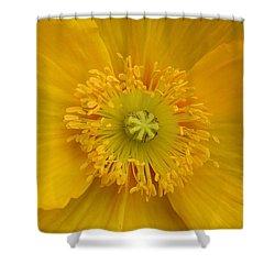 Yellow Poppy Flower Center Shower Curtain
