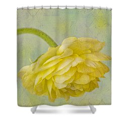 Yellow Ranunculus Macro Shower Curtain by Sandra Foster