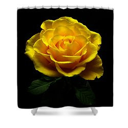 Yellow Rose 4 Shower Curtain